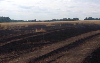 Сгорело пшеничное поле