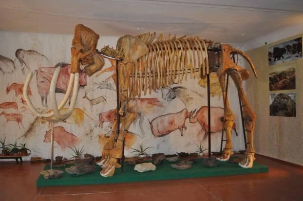 Мамонт в музее Краматорска