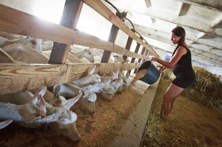 В Украине построят новые фермы и молочно-товарные комплексы