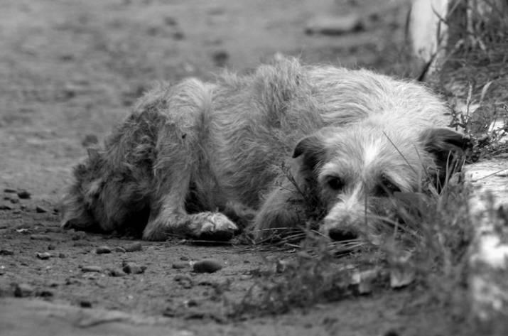 Мэр Рубежного пообещал решить проблему с бездомными животными в городе