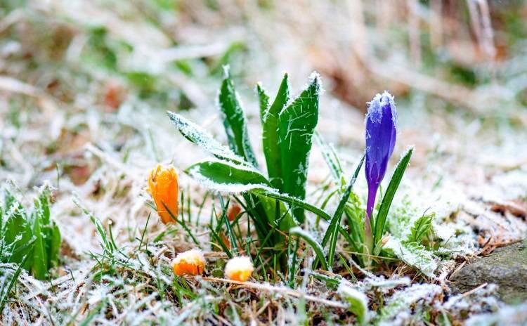 На Луганщине ожидаются заморозки – Укргидрометцентр