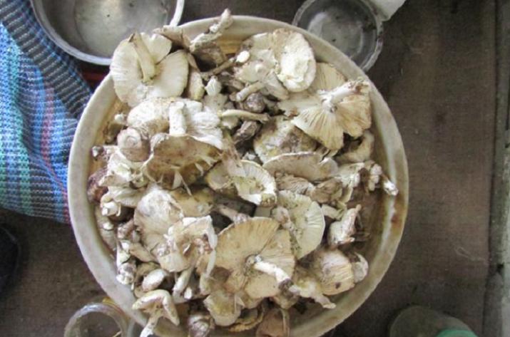 На Луганщине от отравления грибами умер человек