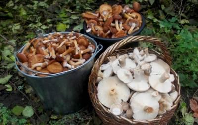 На Луганщине продолжают массово травиться грибами