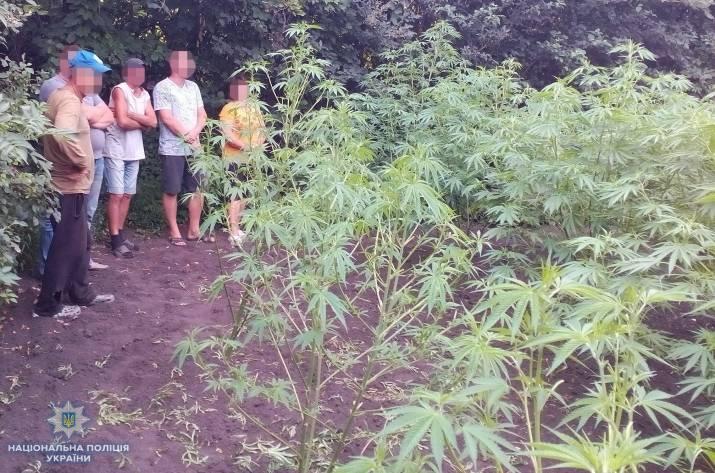 Проводя осмотр домовладения и земельного участка, принадлежащих 56-летнему мужчине, полицейские обнаружили и изъяли марихуану.