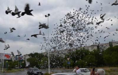 Над Северодонецком пролетели 10 тысяч голубей