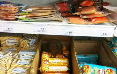 В мариупольском супермаркете на полках обнаружили крысу