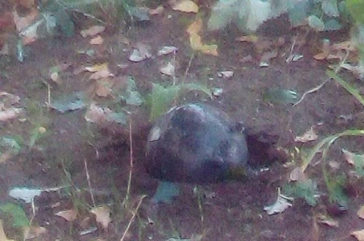 Что взорвалось в Лисичанске (фото)
