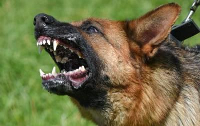 В Святогорске один из пансионатов подозревают в проведении собачьих боёв. Об этом сообщает телеканал