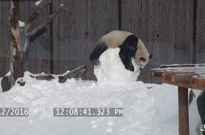 Панда и снеговик