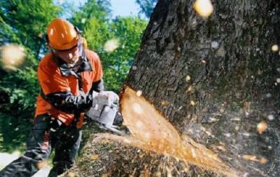 Пилят деревья